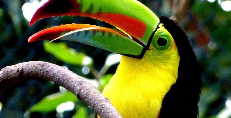 Ontdek Colombia met een fantastische rondreis